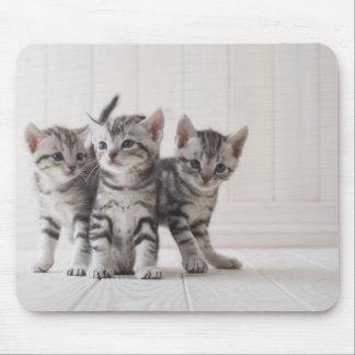 Three American Shorthair Kittens Mouse Pad