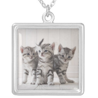 Three American Shorthair Kittens Silver Plated Necklace