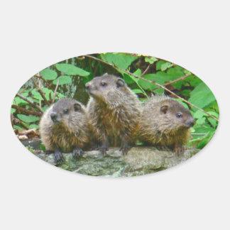 Three Baby Groundhogs Oval Sticker