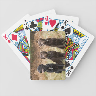 Three Black Labrador retrievers Bicycle Playing Cards