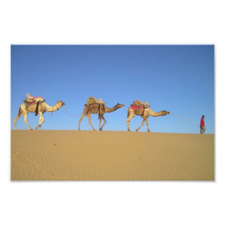 Three Camels in the Desert Poster