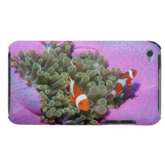 Three Clown Fishes on Sea Anemone, Andaman Sea Barely There iPod Cases