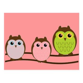 Three Colorful Owls Postcard