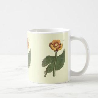 Three Coloured Water Lily Botanical Illustration Coffee Mug