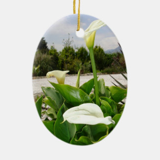 Three Cream Calla Lilies With Garden Background Christmas Ornament