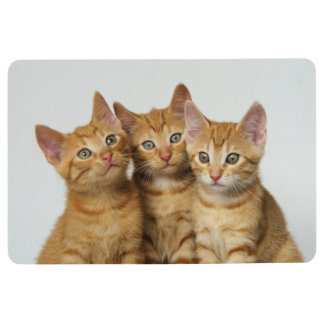 Three Cute Ginger Cat Kittens Together - ground Floor Mat