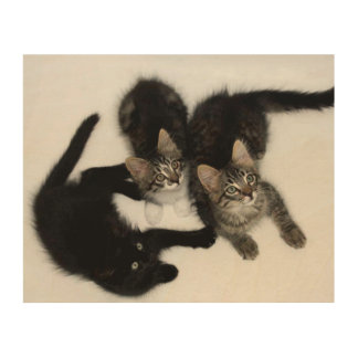 Three Cute Kittens Wood Canvas