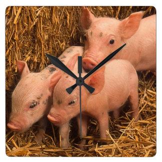 three piglets wall clock