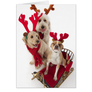 Three puppy dogs sitting at Christmas time Card
