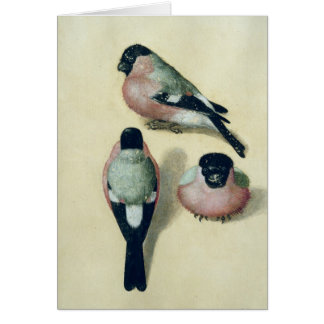 Three studies of a bullfinch card