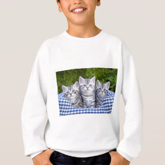 Three young silver tabby cats in checkered basket sweatshirt