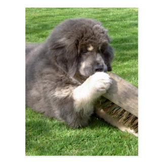 Tibetan Mastiff Jampo with broom Postcard