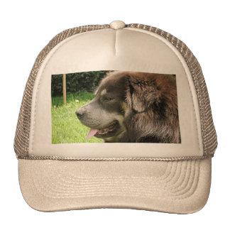 tibetan mastiff.png cap