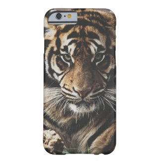 Tiger Case Barely There iPhone 6 Case