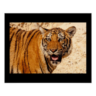 Tiger Cat Animal Christmas Contemporary Modern Poster