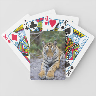 Tiger cub, Bandhavgarh National Park, India Bicycle Playing Cards