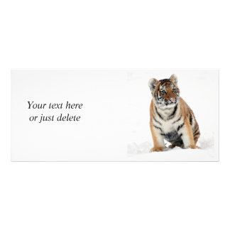 Tiger cub in snow beautiful photo custom rack card