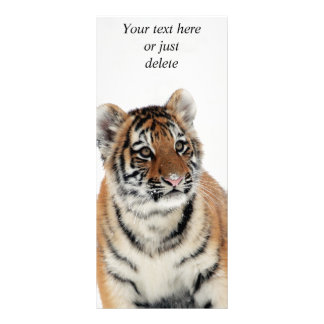 Tiger cub in snow beautiful photo custom rack card