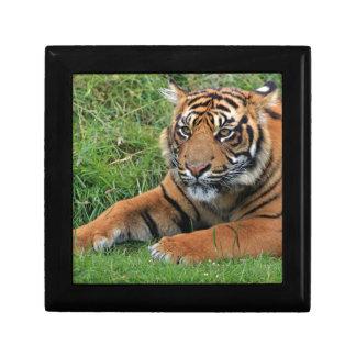 Tiger Cub Portrait Gift Box