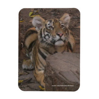 Tiger in front of a log magnet