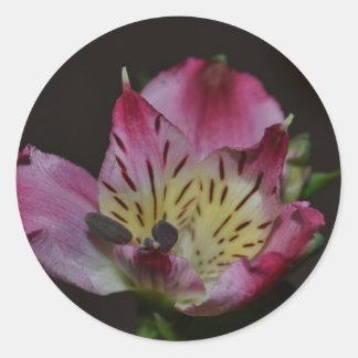 Tiger Lily Classic Round Sticker