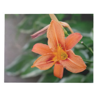 Tiger Lily Iteams Notepad