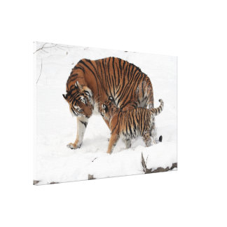 Tiger Mom and Her Baby in Snow Wrapped Canvas