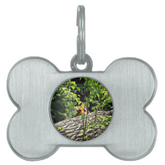 Tiger Peek-a-boo Pet Tag