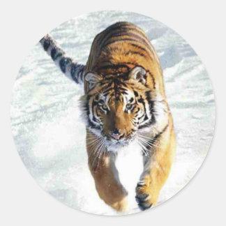 Tiger running in snow round sticker