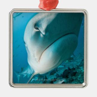 Tiger shark (Galeocerdo cuvier) Shark feed Christmas Ornament