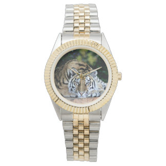 Tiger tiger burning bright watch