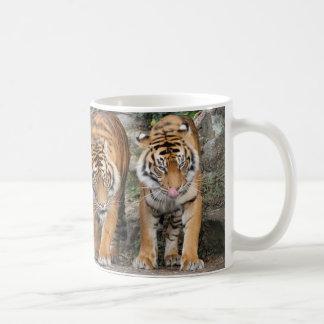 Tigers at Auckland Zoo Coffee Mug