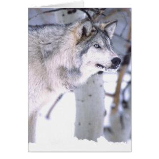 Timber Wolf, Canis lupus, Movie Animal Utah) Card