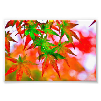 Tinted autumn leaves photo print