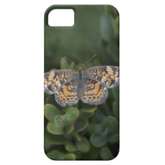 Tiny Butterfly iPhone 5 Case