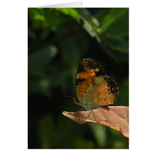 Tiny Butterfly Note Card