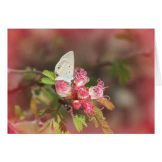 Tiny Butterfly on Pink Flower Note Card