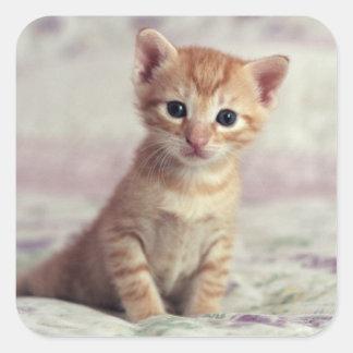Tiny Ginger Kitten Square Sticker