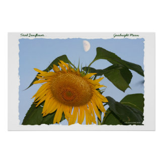 Tired Sunflower...Goodnight Moon Poster