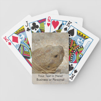tortoise head close up old turtle bicycle playing cards