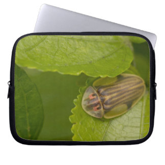 Tortoise shell beetle, cloud forest, Costa Rica Laptop Sleeve
