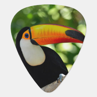Toucan Guitar Pick
