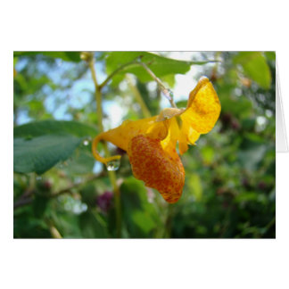 Touch-Me-Not Orange Wildflower Note Card