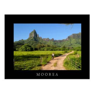 Tourist cycling on tropical Moorea black postcard