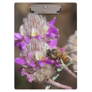Trailing Indigo Bush with a Bee Clipboards