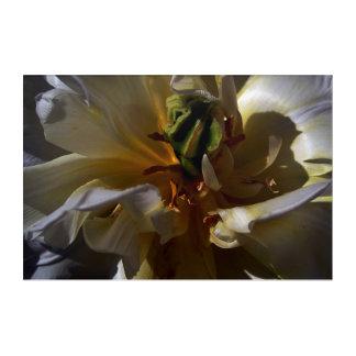 Treasuries 2: Golden Florescence Acrylic Print