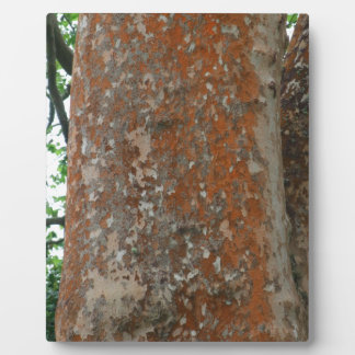 Tree Bark Plaque