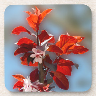 Tree branch with flowers red leaves coasters