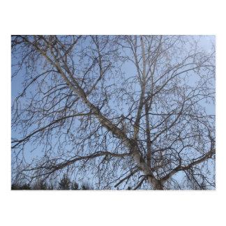 Tree Ephesians 1:3 Postcard