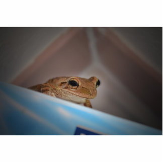 tree frog looking at viewer on blue cut outs